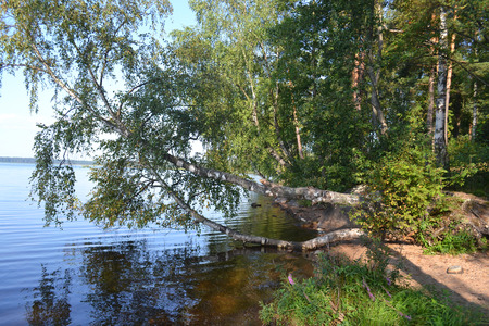 unexplored: Forest on the banks of lake, the Karelian Isthmus, Leningrad region, Russia. Stock Photo