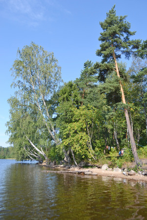 isthmus: Forest on the banks of lake, the Karelian Isthmus, Leningrad region, Russia. Stock Photo
