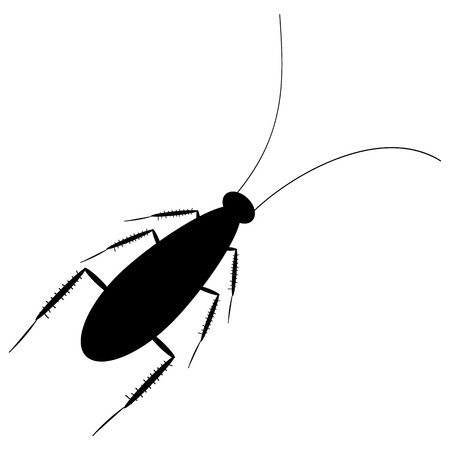 revolting: Cockroach icon on white background. Vector illustration.