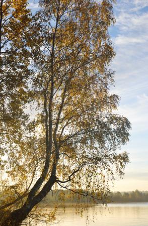 isthmus: Birch tree on the shore of Kavgolovskie Lake at sunrise, Karelian Isthmus, Russia.
