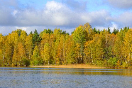 isthmus: Autumn forest on the shore of Kavgolovskie Lake, Karelian Isthmus, Russia. Stock Photo