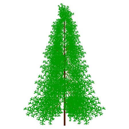 wintery: Fir tree on white background. Vector illustration. Illustration