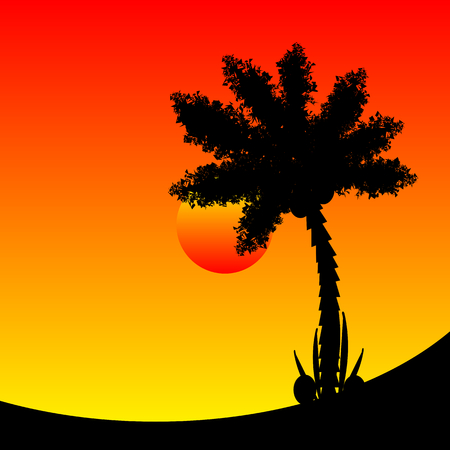 tree leaf: Palm tree at tropic sunset. Vector illustration.