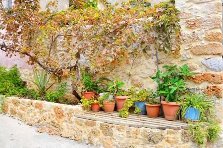 greek pot: Flowers in pots on town street in Malia, Crete, Greece.