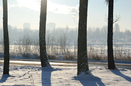 snowscene: Winter landscape with trees at sunny day.