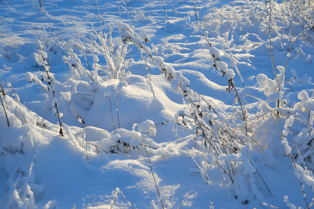 snowscene: Winter landscape with dry grass at sunny day. Stock Photo