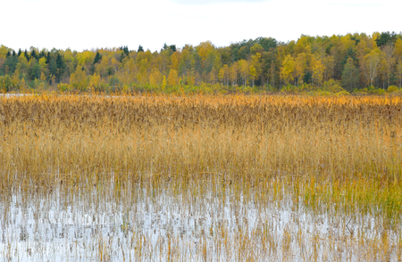 isthmus: Kavgolovskie Lake and autumn forest in Karelian Isthmus, Russia.