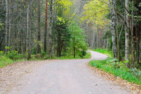isthmus: Dirt road in the forest in Karelian Isthmus, Russia.