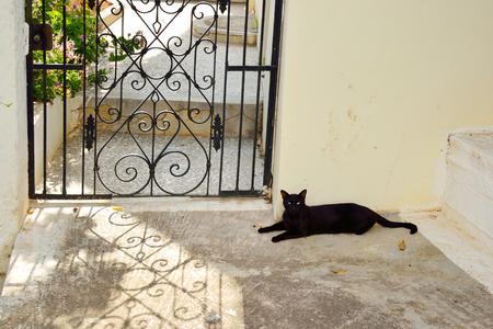 wicket gate: Black cat lying on the ground in Malia, Greece.