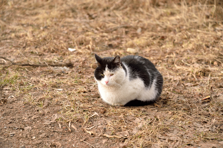 defenseless: Homeless cat on the dry grass in early spring. Stock Photo