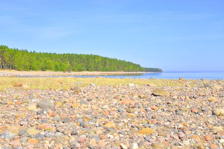 ladoga: Beach on Ladoga lake at sunny morning, the Karelian Isthmus. Stock Photo