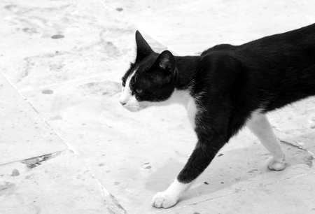 dishevelled: Homeless cat goes close up. Black and white.