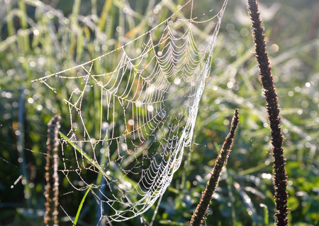 After the rain, spider web with dew drops.