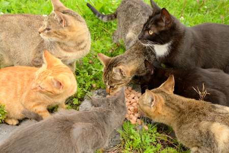 stray: Hungry homeless cats eat food.