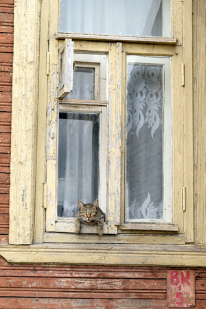 decrepitude: VOLOGDA, RUSSIA - 12 AUGUST 2016: Old wooden window with cat of in the central part of Vologda.