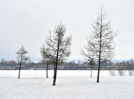 snowscene: Winter landscape with trees on outskirts of St. Petersburg, Russia.