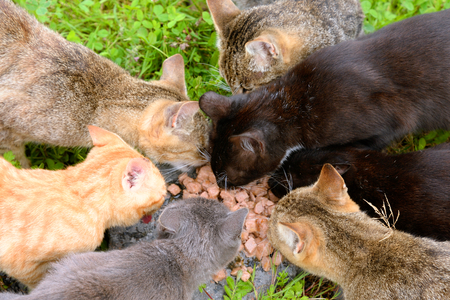 Several colorful hungry homeless cats eat food.