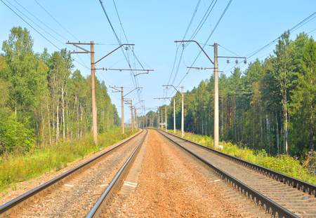 Rail road tracks in the summer forest.