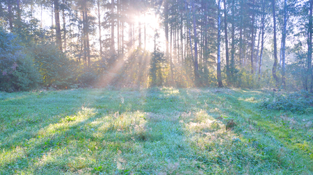 Silhouette of forest at dawn in the Karelian Isthmus, Russia.
