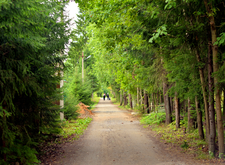 leningrad: Rural road in pine forest at summer in the Karelian Isthmus, Russia. Stock Photo