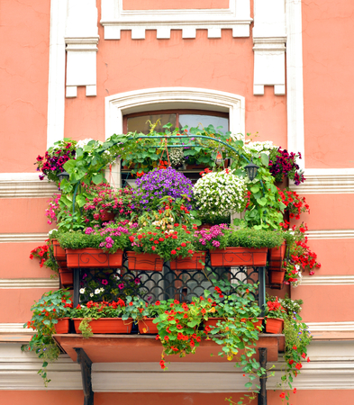 Old balcony overgrown with flowers in the center of St.Petersburg, Russia. Stock Photo