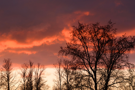 Silhouettes of trees without leaves on a sunset background.