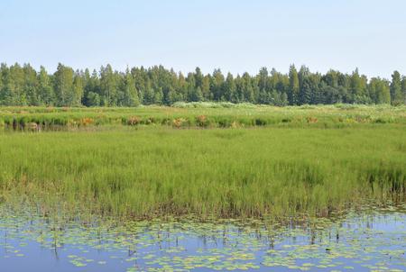 Wetland lake Sestroretsky Razliv in Saint Petersburg, Russia. Stock Photo