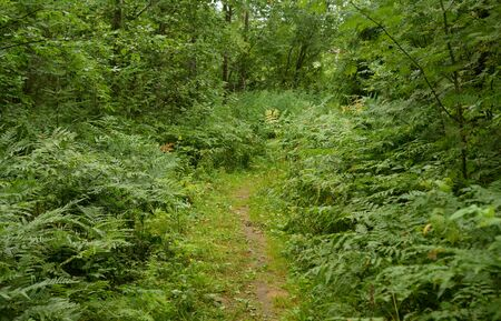 Pathway in deciduous forest at summer day, Russia.