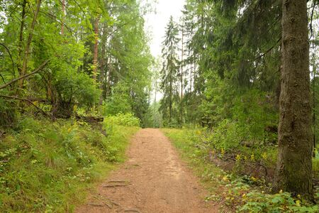 Pathway in deciduous forest at summer day in the Karelian Isthmus, Russia.
