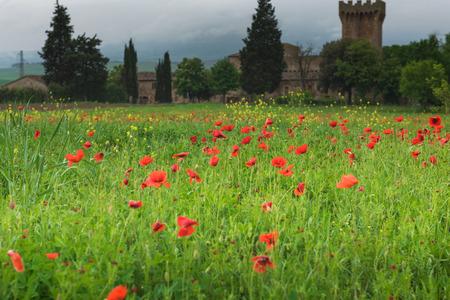 Poppy field in Tuscany, Italy