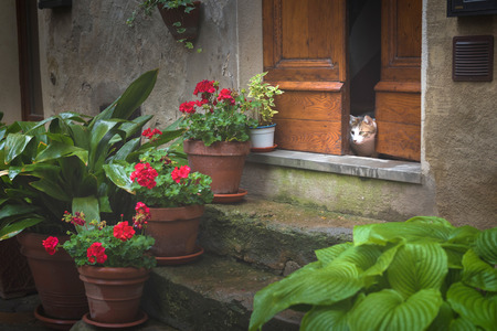 Tuscany spring, Pienza italian medieval village. Siena, Italy. Funny cat looking from the door to the street Reklamní fotografie