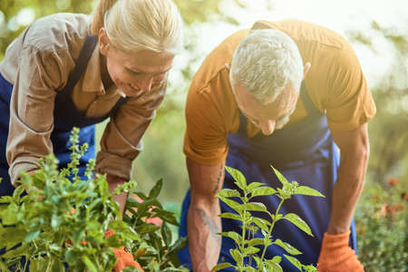 Middle aged caucasian couple looking at plants in garden
