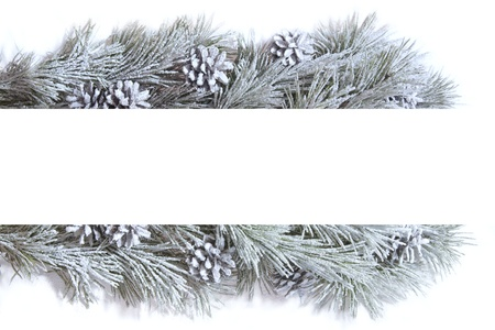 frame made of fir branches photo