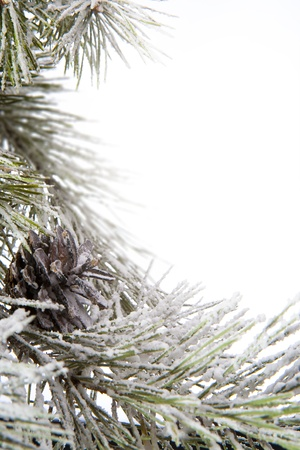 frame made of fir branches Stock Photo - 10460756