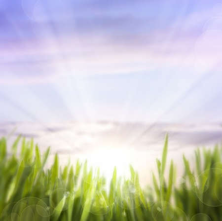 morning sun: abstract background of spring grass and sky