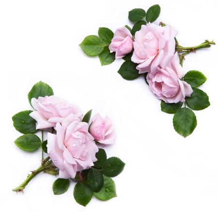 flower border pink: abstract floral element for design