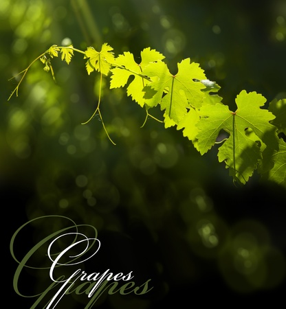 natural green background with vine