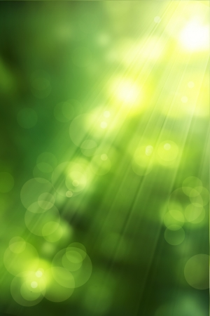 forest background: abstract nature background spring greens