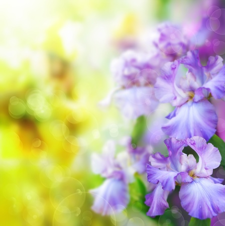summer flowers: abstract summer flower Background Stock Photo