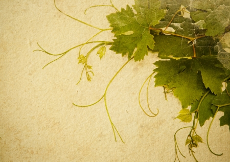 grapevine: abstract vintage style background to design a wine list Stock Photo