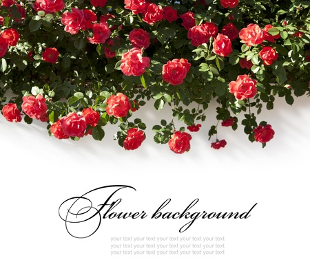 beautiful floral background Stock Photo - 10489423