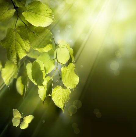 arbol de la vida: mariposa en el fondo de las hojas de primavera joven