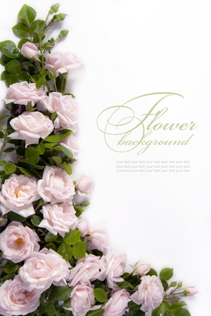 flowers bouquet: Art flower Background for greeting card