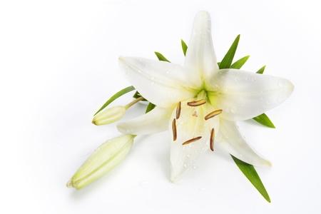 white lily: flor de lis aislados sobre un fondo blanco Foto de archivo