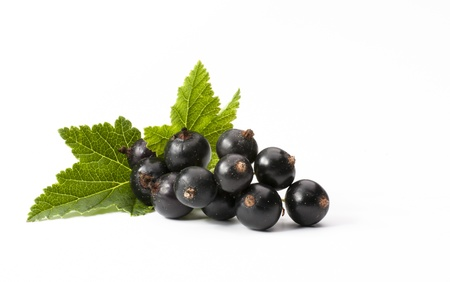 Black Currant Isolated On White Background photo