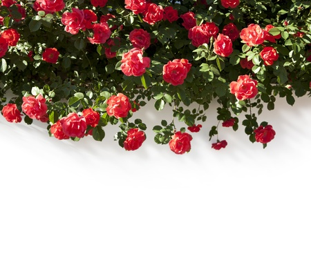 floral Border photo