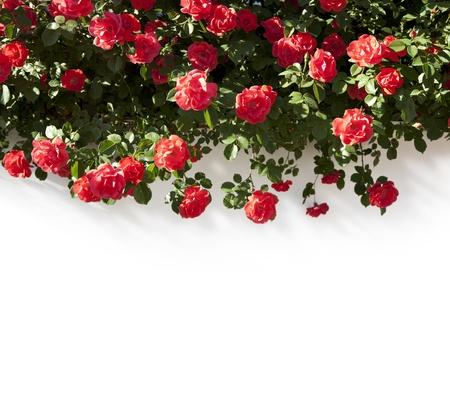 wedding border: floral Border