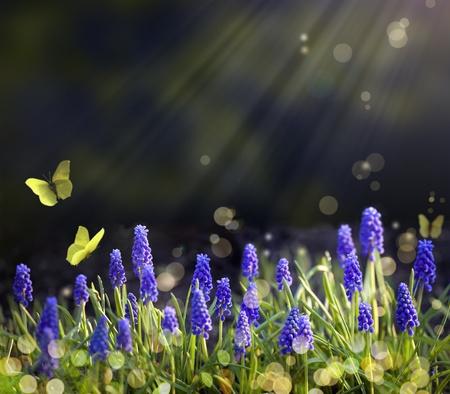 dews: Spring flowering meadows