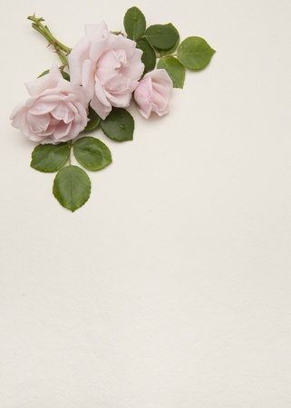 Vintage floral background with space for text photo