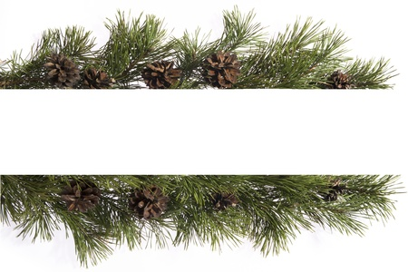pine cones: frame made of fir branches
